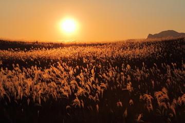 曽爾高原 夕日とススキの大海原