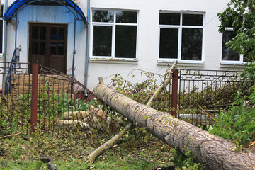 Упавший тополь на забор школы