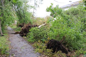 Последствия сильного ветра в городе Зеленогорске