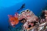 sea fan in Gili Lombok Nusa Tenggara Barat Indonesia underwater