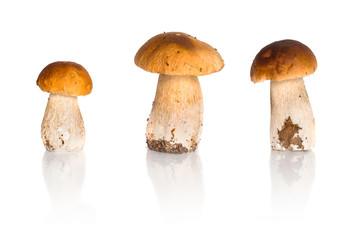 Porcini mushrooms isolated on white (Boletus edulis)