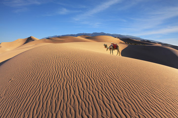 Gorgeous dromedary on sand dunes