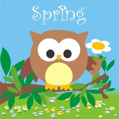 buh spring
