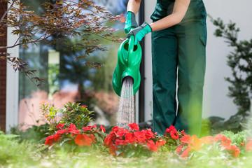Gardener watering flowers