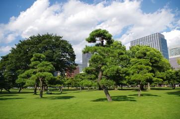 皇居外苑と芝生