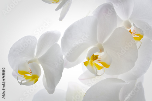 Detail of orchid flowers.