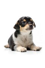 cucciolo affettuoso