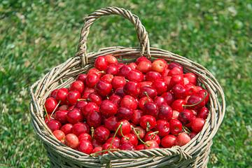 a basket full of cherries
