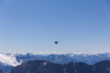 Alpendohle im Hochgebirge