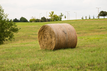 Hay Roll in Grass Field