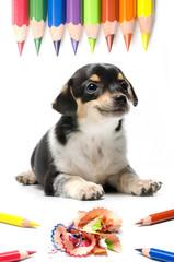 cucciolo affettuoso con matite colorate che sorride