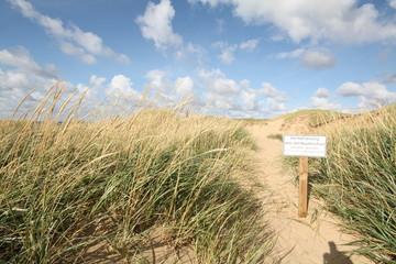Dünenlandschaft - Küstenschutz