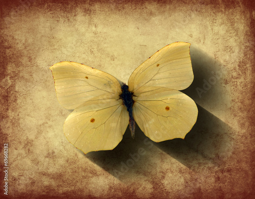 canvas print picture Grunge Butterfly with Shadow
