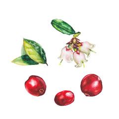 rasberry set