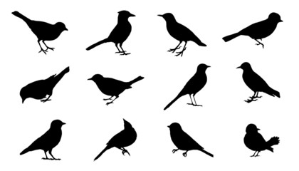 bird2 silhouettes