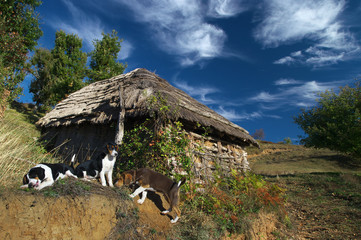 Three dogs in front of hut