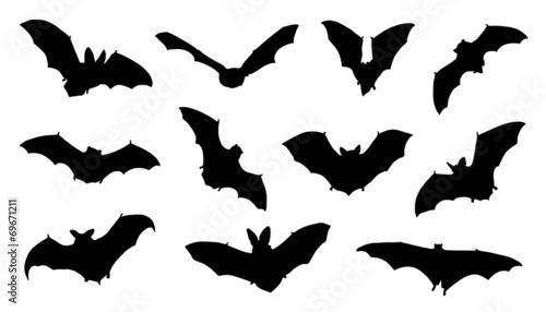 bat silhouettes - 69671211