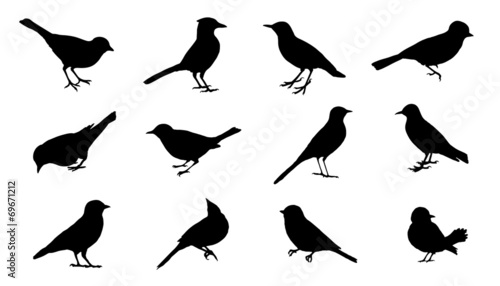 bird2 silhouettes - 69671212