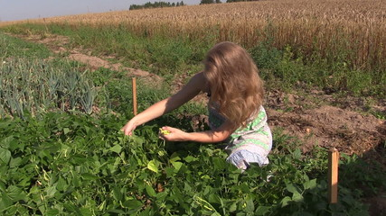 girl reap snap beans in vegetable garden outdoor on sunny day.