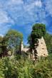 Corse, fougères et village abandonné