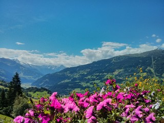 View into the beautiful Zillertal in summer