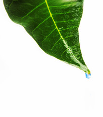 Green leaf with blue water droplets
