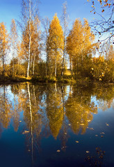 Autumnal nature, reflected Golden trees in water