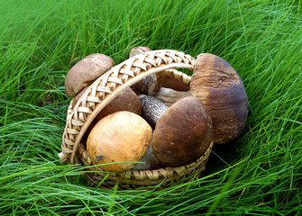 Mushroom in  basket on green grass