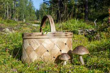 Mushrooms and a basket on a forest path