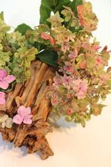 Hortensienblüten auf Wurzel