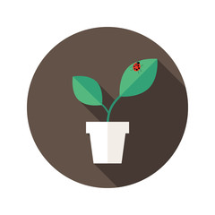 Pot with Leaves and Lady Bug flat icon