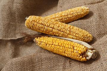 Old corn