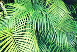 close-up of palm tree leaves - 69689649