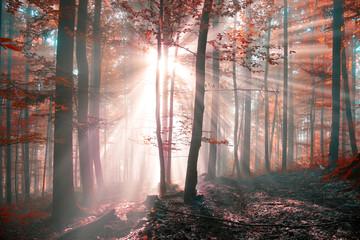 Fantasy sunny autumn forest