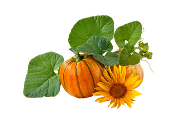 Pumpkin entwined with leaves on a white background