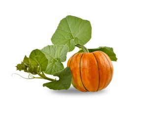 Beautiful pumpkin with leaves on a white background