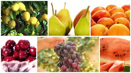 montage including diverse fruits and fruit trees