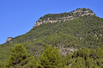 Paisaje de montaña con roca madre cubierta de pinos