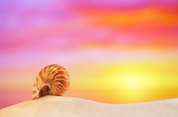 nautilus shell on white beach sand, against sea waves,