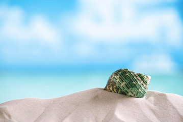 green sea  shell on white Florida beach sand under the sun light