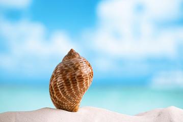 nice sea  shell on white Florida beach sand under the sun light