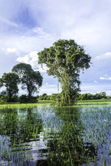 Wetland area in Pantanal, Brazil
