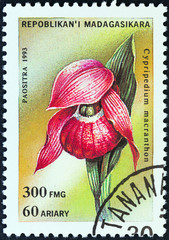 Large-flowered Cypripedium (Madagascar 1993)