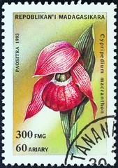 Large-flowered Cypripedium (Madagascar 1993)