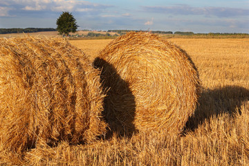 Two bales of hay on the stubble field