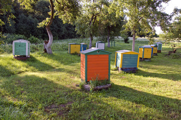 wooden colorful beehive group in summer farm garden
