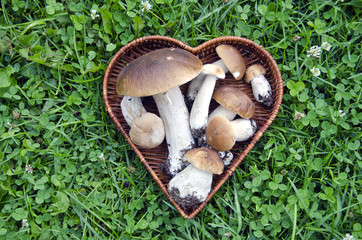 cep mushroom in heart form basket
