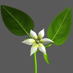 Capsicum flower or Peppers