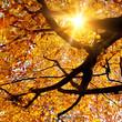 Sonne strahlt durch Baum im Herbst
