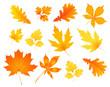 autumn leaves - 69704847